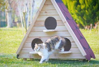 Ahşap Kedi Evi